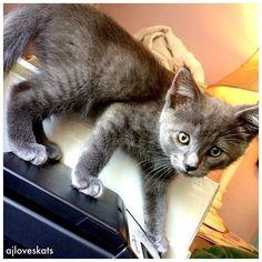 He's so photogenic!  #kittensofinstagram #ilovecats #CatCrushWednesday #cutecat