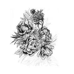 Love this botanical illustration by @lenitapepa. #art #sketch #botanical #floral #nature #drawing #blackandwhite #artist #illustration #pencil #peonies