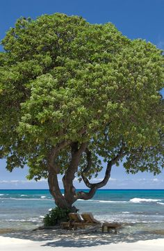 Peaceful view of the Pacific ocean from a sandy beach on the Big Island of Hawaii.