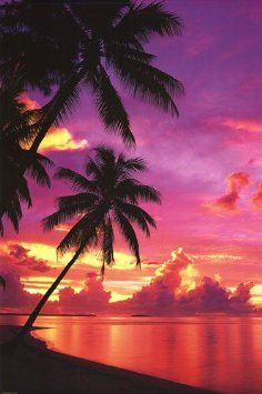 Tahitian Sunset (Palm Trees) Art Poster Print