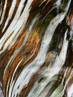Metallic and white stripe texture. Gum tree. Great colors to inspire an entire room decor around