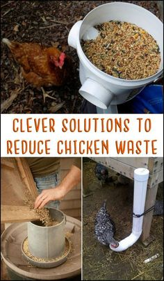 Got backyard chickens? Then you might want to have a look at these clever solutions that reduce chicken feed waste! :)