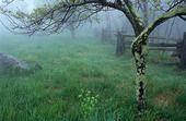 Shenandoah Fog    Gallery of Ed Lowe