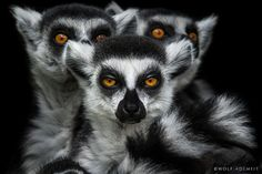 GREMLINS II by Wolf Ademeit on 500px