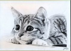 Fiverr freelancer will provide Illustration services and make a drawing of your pet including Figures within 12 days Cute Animal Drawings, Animal Sketches, Art Drawings Sketches, Drawings Of Cats, Animals Tattoo, Kitten Drawing, Cat Sketch, Realistic Drawings, Cat Tattoo