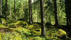 Finland forests. Pick berries, hunt for mushrooms, enjoy mosquitoes, fall down holes.