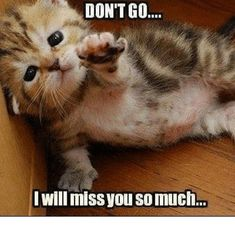Bonuscats: funny and drunk cats and just cute kittens Cute Kittens, Cats And Kittens, Fluffy Kittens, Funny Animal Quotes, Cute Funny Animals, Animal Memes, Funny Cute, Funniest Animals, Humorous Animals