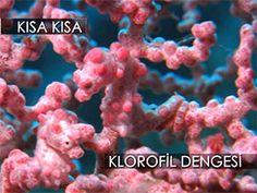 Klorofil dengesi Video