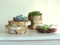 white birch bark wood coaster slices discs rustic by aniamelisa, $10.95