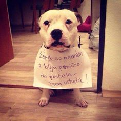 Animals And Pets, Cute Animals, Everything And Nothing, Good Jokes, Haha, Pitbulls, Humor, Words, Funny