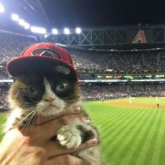 Grumpy cat being forced to watch baseball. No.