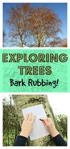 Exploring trees through the craft of bark rubbing. This really simple woodland crafts idea is a great activity to do with kids