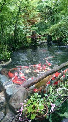 Beautiful traditional Japanese garden