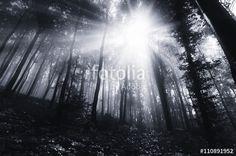 """Pobierz zdjęcie royalty free  """"sun rays in dark forest"""" autorstwa andreiuc88 w najniższej cenie na Fotolia.com. Przeglądaj naszą bazę tanich obrazów online i odnajdź doskonałe zdjęcie stockowe do Twoich projektów reklamowych!"""