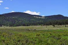 Colorado beauty.