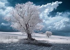 Infrared Photography of Nature