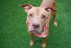 SAFE☺ STAR – A1110185 available for adoption at NYC ACC.