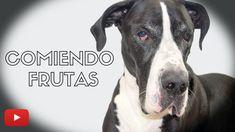 Gran Danes Comiendo Frutas - YouTube Pitbulls, Pets, Animals, Delaware, Youtube, Board, Blog, Giant Dogs, Pet Products