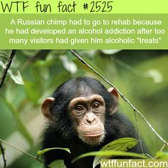 Facts About Animals Intersting Animals Information Wtf Facts Funny Interesting Weird Facts