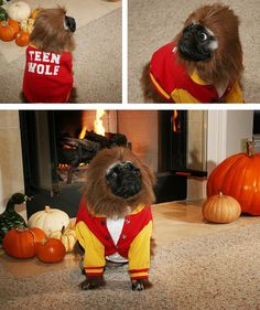 cosplay-pug-teenwolf-dog-costume