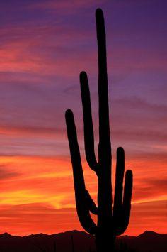 USA - Saguaro cactus , Arizona.  I miss the desert.  It has a beauty that speaks to my soul.