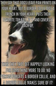 Nobody forgets a border collie