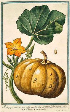 Squash and Blossom, Giorgio Bonelli, 1772-93