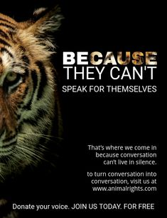 Animal rights quote poster template Tiger Species, Endangered Species, Wwf Poster, Tiger Poster, Yulin Dog Festival, Animal Rights Quotes, Leaflet Template, Animal Posters, Wildlife Conservation