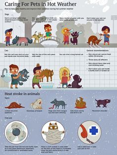 Pets in hot weather!