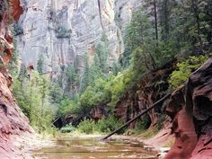 West Fork of Oak Creek, the most popular hike near Sedona, Arizona. The maintained trail is 3 miles long but the creek can be explored for many miles more. The Slide Fire of 2014 burnt much of the surroundings though the canyon itself is apparently unaffected