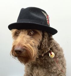 Ventje the Hatdog
