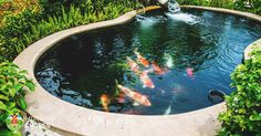 8 Big Reasons to Build Backyard Ponds to Improve Your Home