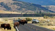Yellowstone National Park on Amtak