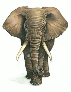 Lgant Copy Schma Photostyle Art Willing Creative Fminin& Elephant Love, Elephant Design, Elephant Art, Elephant Tattoos, African Elephant, Animal Tattoos, Elephant Sketch, Animal Paintings, Animal Drawings