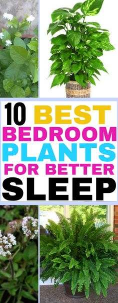 These are the best plants for your bedroom! They'll help you sleep so much better! Pinning for later!