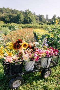 This Flower Farm Will Make You Want To Become A Flower Farmer - Gal Meets Glam - - Have you ever dreamed of becoming a flower farmer? Julia Engel takes you to Flourish Flower Farm, a beautiful flower farm, in Asheville, North Carolina. Spring Aesthetic, Flower Aesthetic, Spring Flowers, Wild Flowers, Happy Flowers, Flower Farmer, Cut Flower Garden, Small Flower Gardens, Cactus Flower
