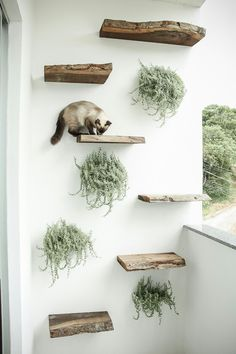Sweet idea for the balcony l playground for the catnet but there .- Süße Idee für den Balkon l Spielplatz für das Catnet aber dann bitte Sweet idea for the balcony l playground for the catnet but then please …… - Crazy Cat Lady, Crazy Cats, Cat Playground, Natural Playground, Cat Room, Pet Furniture, Furniture Plans, Dog Crate, Balcony Garden