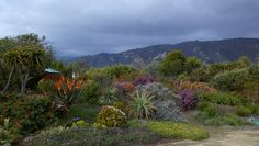 South African garden at Seaside Gardens. by entireleaves, via Flickr