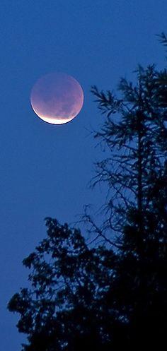 Lunar Eclipse - Vertical Crop