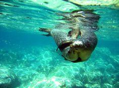 Isla Espiritu Santo: SNORKELING WITH SEA LIONS