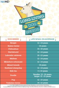 Which dog breeds live the longest? 🐶 Our pet guide can help. Hoping bella lives that long! Animal Nutrition, Healthy Pets, Shetland Sheepdog, Miniature Schnauzer, Mixed Breed, Shih Tzu, Beagle, Pet Care, Dachshund