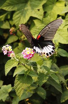 Simply Beautiful Butterfly!