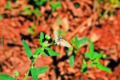 """Olhares do avesso: Neblina no verde """"Longe desta neblina, somando um passo ou dois, estão todas as borboletas pousando, polinizando e colorindo contornos e conteúdos."""" """"Far from this maze, adding a step or two, are all landing butterflies, pollinating and coloring contours and content.""""  #Crônica #neblina #Chronic #fog #Хронический #туман #Chronische #Nebel #慢性 #雾 #만성 #안개 #niebla #brouillard #पुरानी #कोहरे #nebbia."""