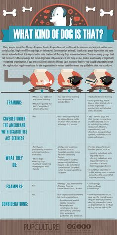 Companion Dog Types: Very enlightening infographic for the definition and classification of dogs as companion animals, therapy or service dogs according to their training. Service Dog Training, Service Dogs, Dog Training Tips, Training Schedule, Therapy Dog Training, What Kind Of Dog, Emotional Support Animal, Dog Facts, Companion Dog