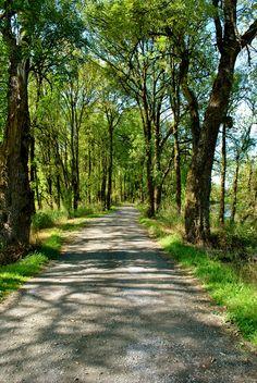 A quiet avenue (Oregon) by Wendi Kali cr.c.