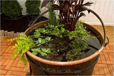 Container water garden ideas and D.I.Y. | Pond pots | Patio water gardens