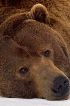 Bear with me...wanna snuggle?  Just look at his face.