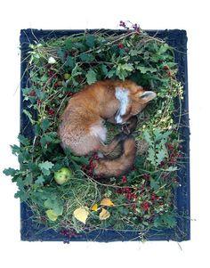 Aww - sweet little foxy!