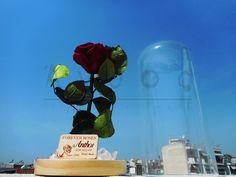 Forever roses Forever Rose, Flower Art, Fair Grounds, Roses, Flowers, Fun, Art Floral, Pink, Rose