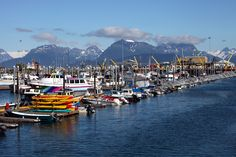 Harbor in Homer AK. My grandparents boat is here.